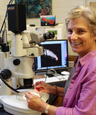 Biology professor Sara Lewis poses for a portrait in her lab in Barnum Hall, where she carries out experiments relating to the evolutionary ecology of different kinds of insects, fish and marine invertebrates, on Sept. 21. (Alexis Serino / The Tufts Daily)